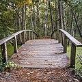Nags Head Woods Preserve-3917-2 (37301670196).jpg