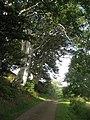 Narrow road by Newmains - geograph.org.uk - 955629.jpg