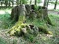 Naturdenkmal Siebenstämmige Buche Ostenfelde Melle - Datei 1.jpg
