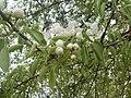 Nature in Smolensk - 43.jpg