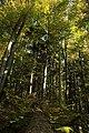 Nature reserve Ptaci stena in autumn 2011 (10).JPG