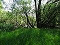Naturschutzgebiet Heuckenlock 21.05.2014 17.JPG