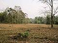 Nedumkayam Reserve Forest, Nilambur - panoramio (1).jpg