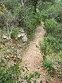 Nesher, Park Nesher, Wadi Katia 122.JPG