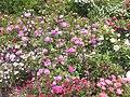 New York Botanical Garden 03.jpg