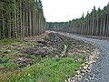New forest road, Wark Forest - geograph.org.uk - 244687.jpg