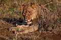Nkomazi Game Reserve, South Africa (22639312832).jpg
