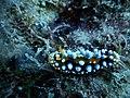 Nudibranch Bay Bone.jpg