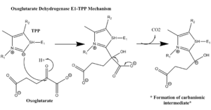 Oxoglutarate dehydrogenase complex - The OGDH E1-TPP mechanism involves the formation of a stabilized carbanion intermediate.
