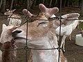 Oaklawn Farm Zoo, May 16 2009 (3538904383).jpg