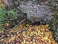 Odens källa (Raä-nr Gudhem 33-1) 3531.jpg