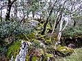 On Gartan Mountain - panoramio.jpg