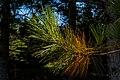 Orange and Green Pine Needles PLT-LV-3.jpg