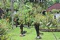 Orchid Garden Bali Indonesia - panoramio (4).jpg