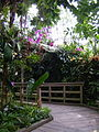 Orchid room at the US Botanic Gardens - Stierch.jpg