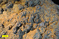 Ordovician hardground Utah.jpg
