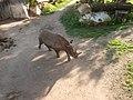 Ostafrikanisches Spitzmaulnashorn (Zoo Leipzig) (1).jpg