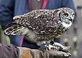 Owl2 (5087124336).jpg