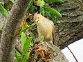 Pássaro em Viamão 023.JPG