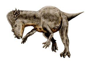 Denver Formation - Pachycephalosaurus