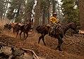 Packer on the Klamath National Forest (16370094125).jpg