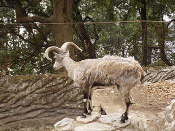 Padmaja Naidu Zoological Park!!.jpg