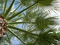 Palm tree leaves green.jpg