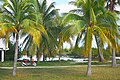 Palm trees at the Sirena beach at Cayo Largo.jpg
