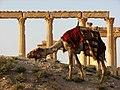 Palmyra (2599949463).jpg