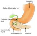 Pancreas nih-el.png