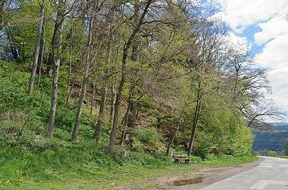 Pannonischer Mischwald Töllergraben GLT 0028 (03).jpg