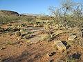 Pantano Foundations Number 2 Arizona 2014.jpg