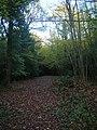 Park Wood - geograph.org.uk - 1038051.jpg