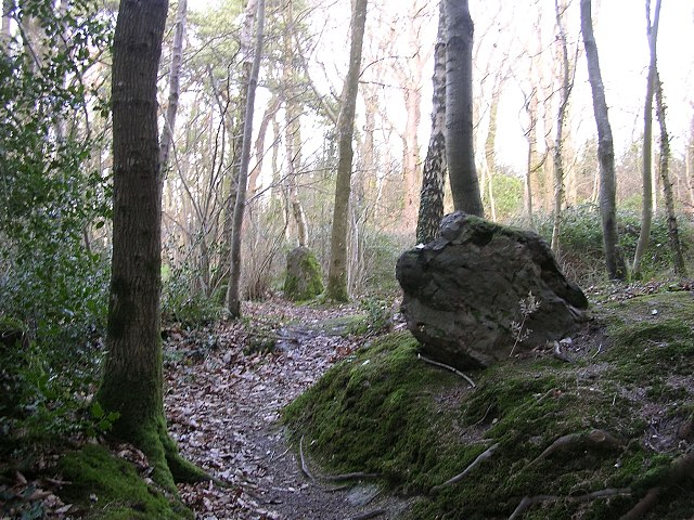 Part of the Rempstone stone circle in birch woodland, Purbeck - geograph.org.uk - 25149