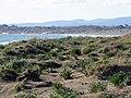 Passoscuro - Dune a nord, verso la spiaggia di Palidoro 17.jpg
