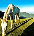 Paye Meadow Horse.jpg