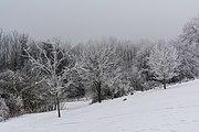 Pernegg Winterlandschaft 20170128 03.jpg