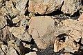 Petroglifos Teneguia.jpg