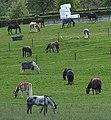 Pferdekoppel (Vaals).jpg