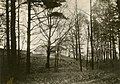 Picnic pavilion, Scarborough, Ontario, 1910... Later the site of the R. C. Harris Water Treatment Plant - pictures-r-6594.jpg