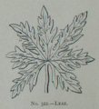 Picture Natural History - No 322 - Leaf.png