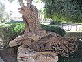 PikiWiki Israel 45096 Wood carving in Shfeya.JPG
