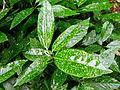 Plant beauty in winter 002.JPG