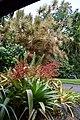 Plants at the Gardens (33274174616).jpg