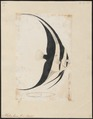Platax teira - 1700-1880 - Print - Iconographia Zoologica - Special Collections University of Amsterdam - UBA01 IZ13500493.tif
