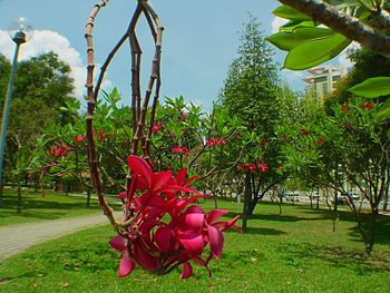 Orchids in Bedok Reservoir Park