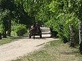 Poland. Sierpc. Open air museum, (Skansen) 061.jpg