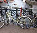 Pollo bike.jpg