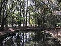 Pond of Miyazaki Shrine from Shinkyo Bridge.jpg