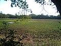 Ponedera, Atlántico, Colombia - panoramio (6).jpg